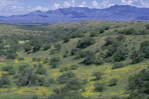 Arizona's semi-arid Sonoita Creek–Upper Santa Cruz River watershed is home to an extraordinarily rich and diverse community of pollinators. Photograph courtesy BLM