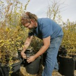 Fruit trees re-create Tucson's birthplace