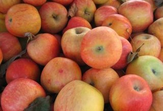 Let 2010 Be the Year of the Heirloom Apple