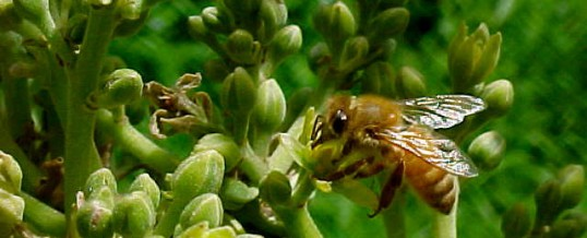 Why focus on pollinator recovery for farm, ranch & wildlands health in Southern Arizona?