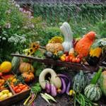 'Seed schools' can help nurture local heirloom plants