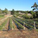 UCSC farm_smllr