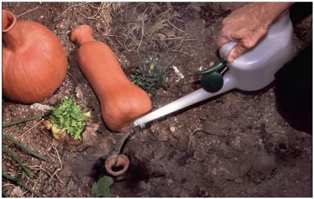 Olla irrigation.
