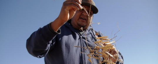 Untold Arizona: Arizona-Grown Tepary Beans Preserve The Past, Hold Promise For The Future