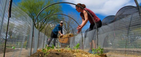 In the Arizona Desert, Tucson Models Affordable Food Access