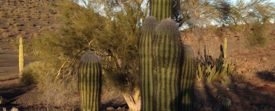 An Ironwood Tree and a Saguaro Ask Gary for Help in Conflict Resolution
