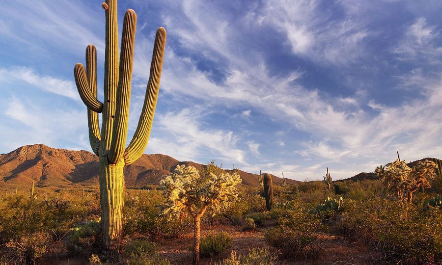 cactus-and-desert-landscape-with-bright-kencanning